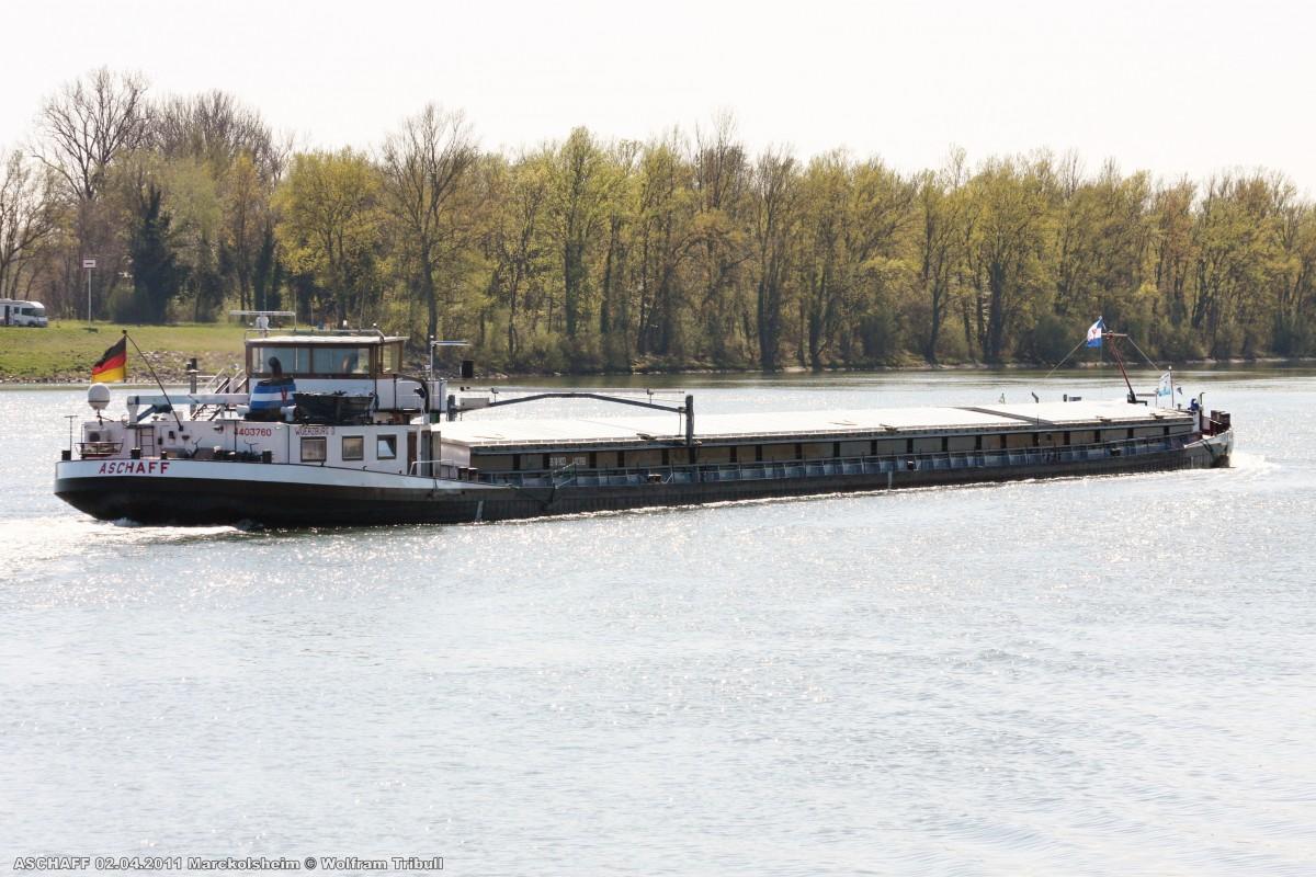 ASCHAFF am 02.04.2011 bei Marckolsheim (Frankreich)
